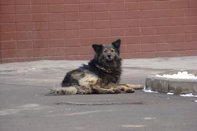 Карантин по бешенству животных сняли в Сергиево‑Посадском районе
