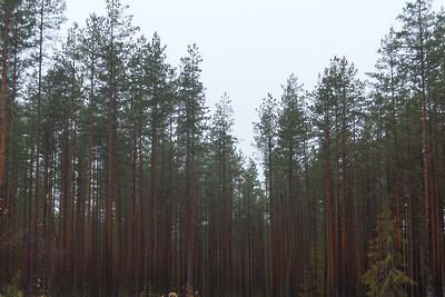 Лыжные гонки в лесопарке Мытищ 29 февраля отменили из‑за плюсовой температуры