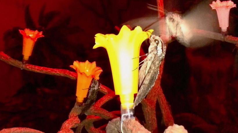 Московский зоопарк пополнится новыми тропическими бабочками