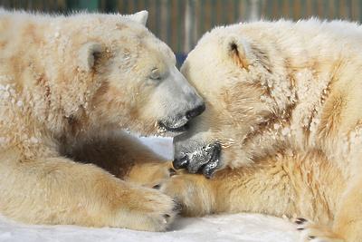 Московский зоопарк установил веб-камеры в вольерах. List%21v5e