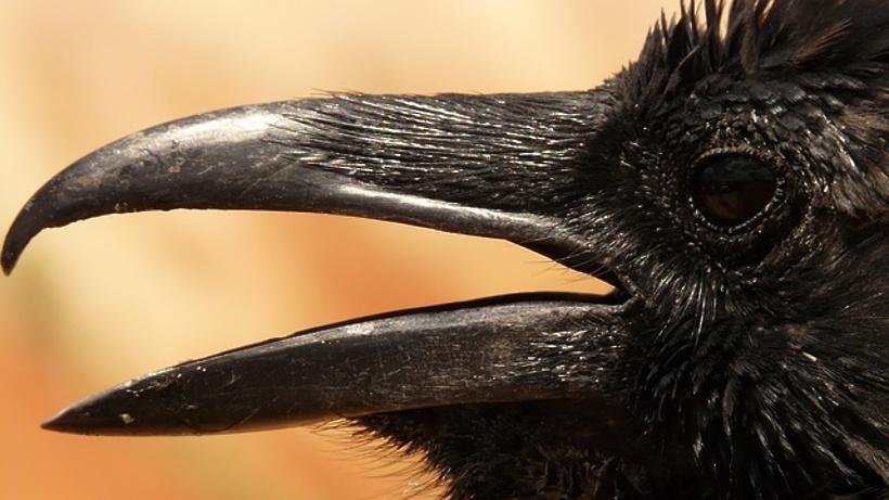 Птичий грипп найден наптицефабрике под Москвой