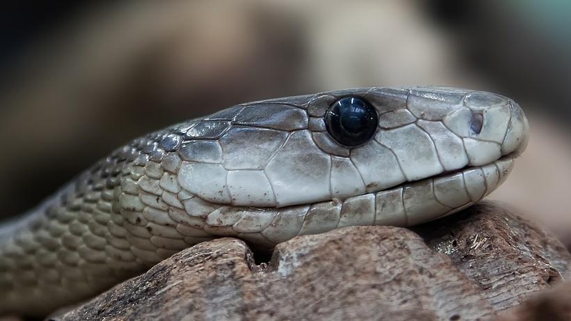 Спасатели поймали змею в подъезде жилого дома в Орехово‑Зуеве