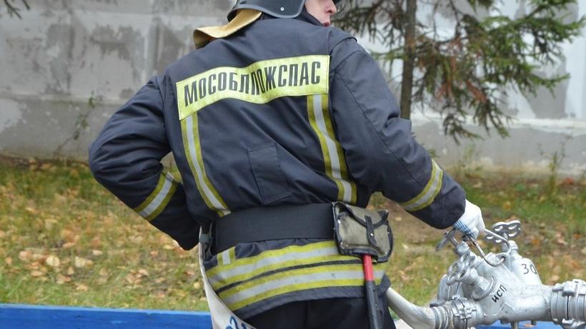 Жителя Солнечногорска избавили от набегов лисицы на курятник