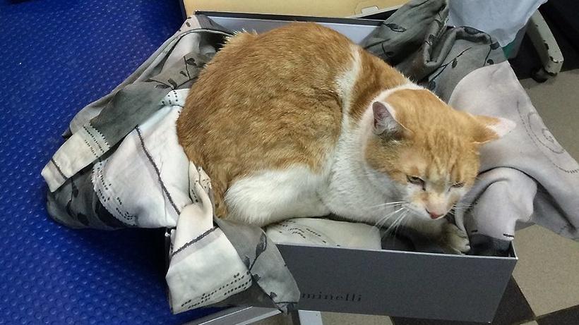 Москвичка спасла трёх котов, выброшенных владельцем изокна высотки