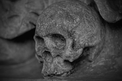 Коллекцию муляжей черепов представят жителям и гостям Балашихи в краеведческом музее