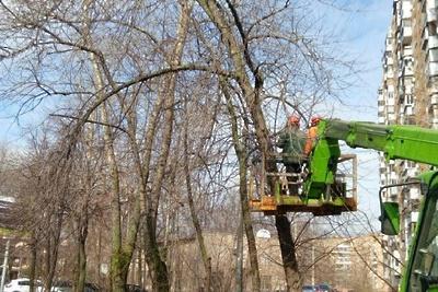 Более 1,2 тыс аварийных и сухостойных деревьев удалили в Подмосковье с начала лета