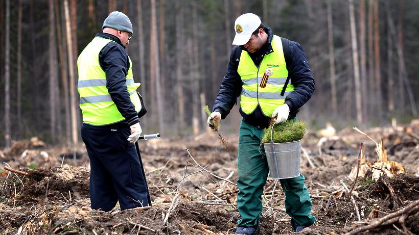 Неменее 1 млн деревьев посадят участники акции «Лес Победы» вПодмосковье