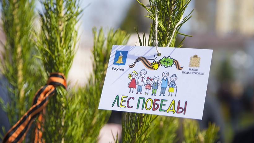 Около полутора млн деревьев высадили вПодмосковье наакции «Лес Победы»
