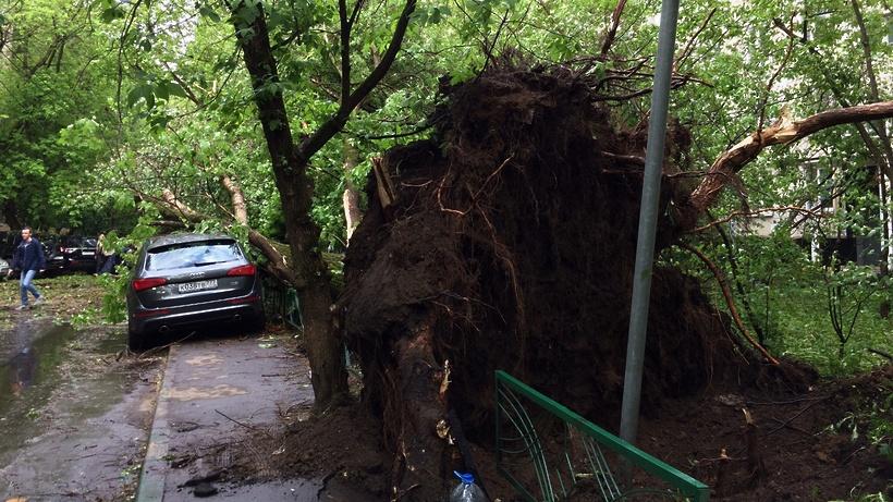 Воробьев поручил муниципалитетам помогать жителям из-за урагана вПодмосковье