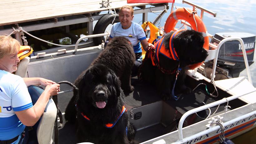 Напляжах столицы увеличат количество собак-спасателей