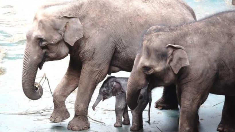 Слоненок в городе пугачеве
