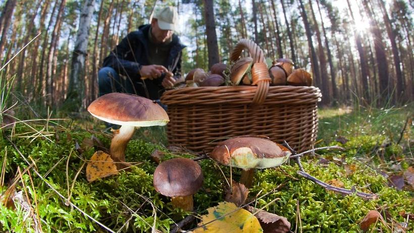 Прикарпатців закликають бути пильними під час збирання грибів (відеосюжет)