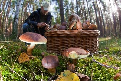 Как жителям Подмосковья не заблудиться в лесу
