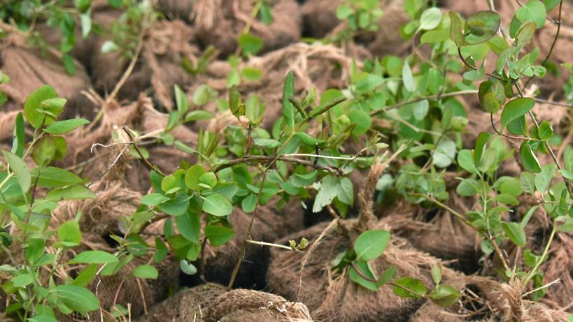 В «Сокольниках» высадят 4 тысячи деревьев взамен уничтоженных ураганом