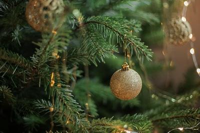 Две новогодние елки установили в Дзержинском