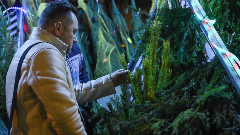 В Подмосковье открывается первый в сезоне елочный базар