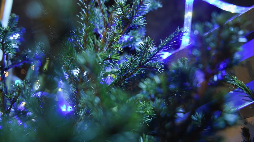 Королёвцы могут отвезти новогодние ёлки наутилизацию вМытищи