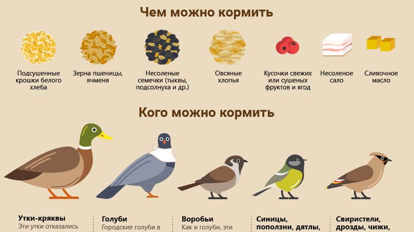 Москва | Новости | Как правильно кормить птиц зимой