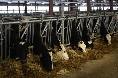 8 мрлд руб инвестиций привлекли в молочное животноводство в Подмосковье в 2018 г