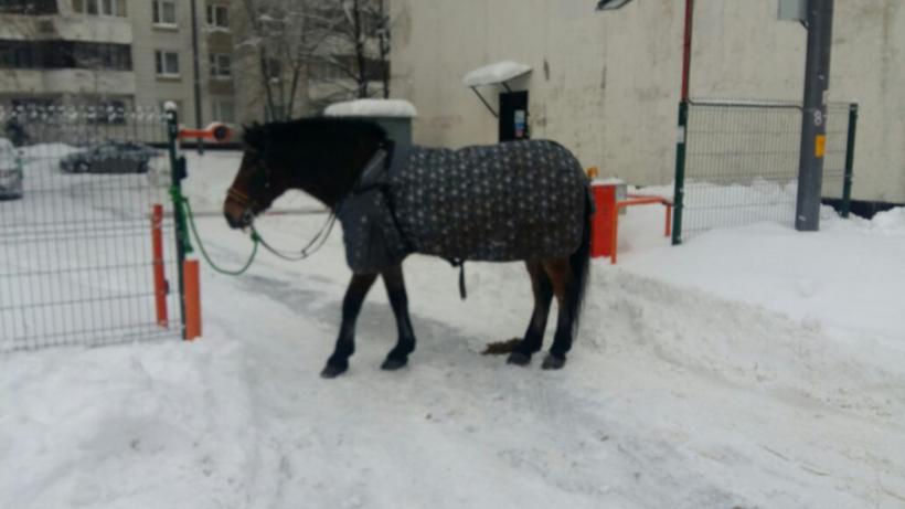 В столице России словили лошадь, сбежавшую изконно-спортивного клуба