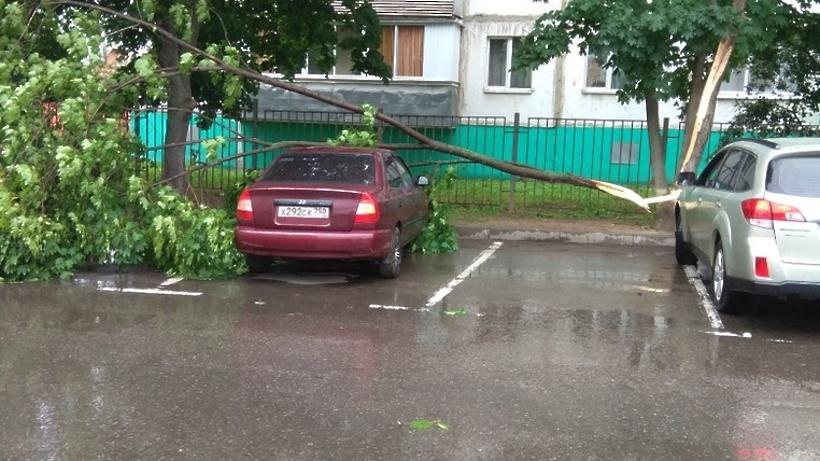 Москвичам рекомендовали не парковать авто под деревьями из‑за сильного ветра
