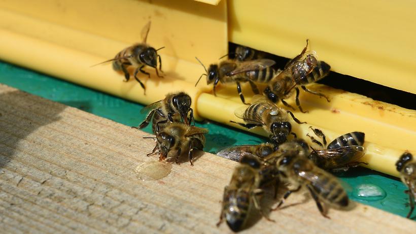 Искусственные убежища для пчел и ос начали создавать в Московском зоопарке