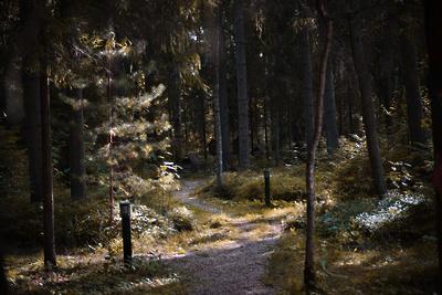 В Кузьминском лесопарке Котельников не собираются строить хостел