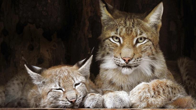 Животные в Московском зоопарке начнут впадать в зимнюю спячку в середине  ноября - Общество - РИАМО