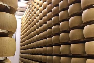 Четыре завода начнут строить на территории сырного кластера в Подмосковье на этой неделе