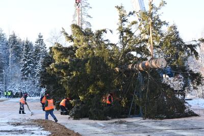 Как рубили главную новогоднюю ель России