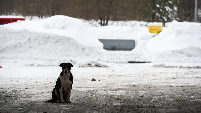 Информацию о массовом отравлении собак в Зарайске передали в полицию