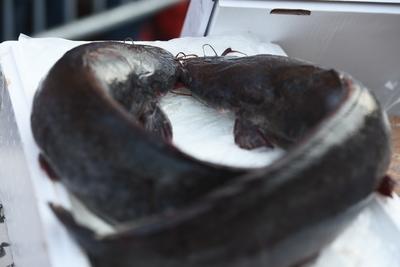 Новый рыбоводный комплекс построят в Солнечногорске