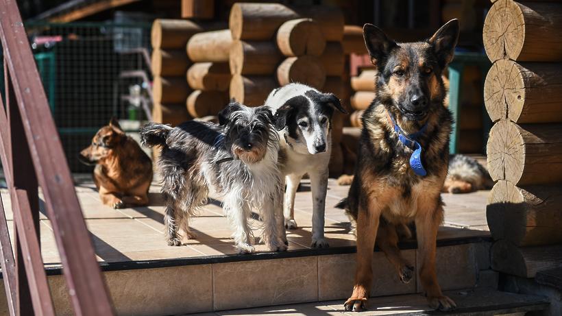 Новый приют для бездомных животных появится в Серпухове