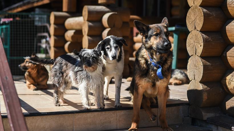 24 приюта по содержанию животных в Подмосковье могут получить допфинансирование в 2021 г