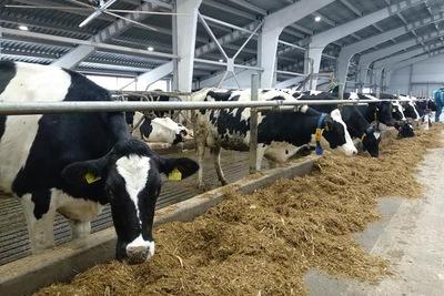 Семь семейных животноводческих ферм Подмосковья получили гранты на сумму 165 млн рублей