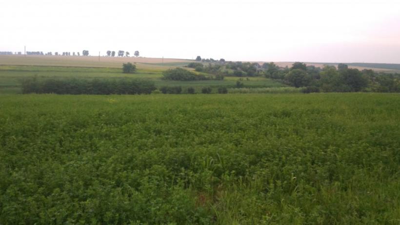 В поселке Красково Люберец оформляют земельный участок под строительство школы