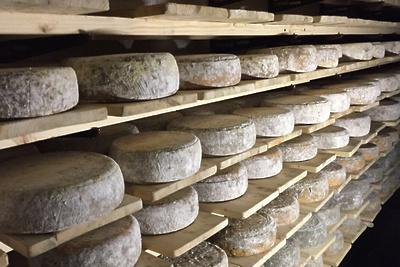 Твердый сыр из Королева получил золото международного чемпионата в Италии