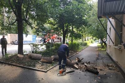 Рабочие спилили засохшие деревья на Коммунальной улице в Подольске