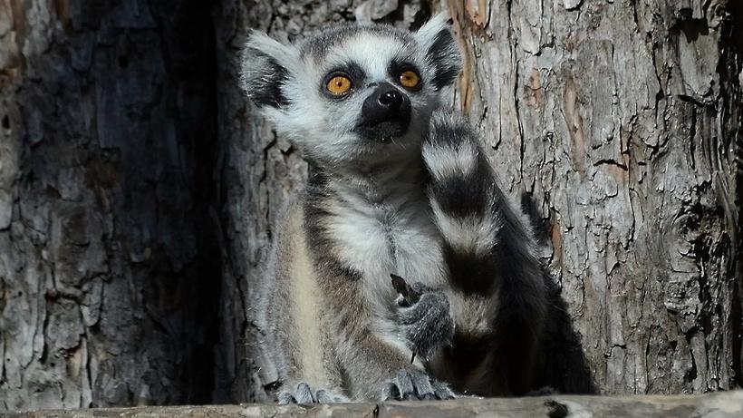 Московский зоопарк запускает онлайн‑трансляции из вольеров - Общество -  РИАМО