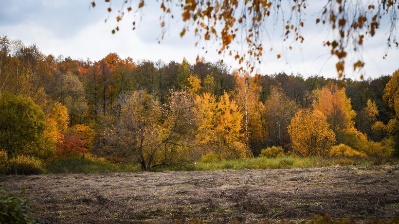 335 человек заблудилось в подмосковных лесах с начала сентября