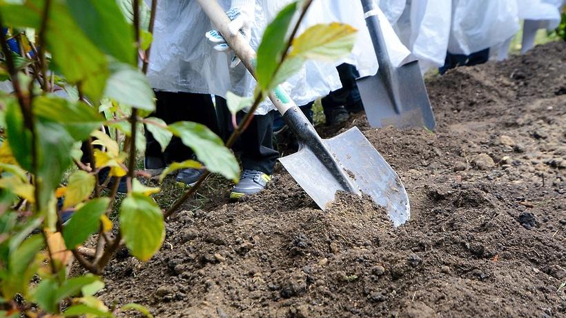 Почти 350 деревьев высадили в столичном Парке Дружбы в рамках благоустройства