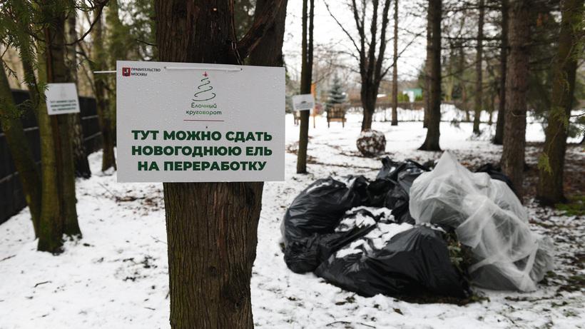 Жители Подмосковья сдали на переработку рекордное количество новогодних елок