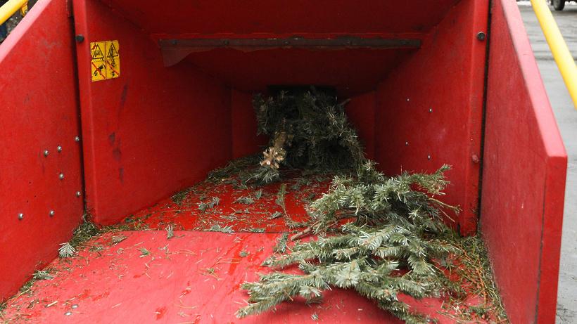 В Щелкове с 15 февраля можно сдать новогоднюю ель на утилизацию