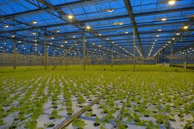 Новый тепличный комплекс даст Воскресенску более 1 тысячи рабочих мест