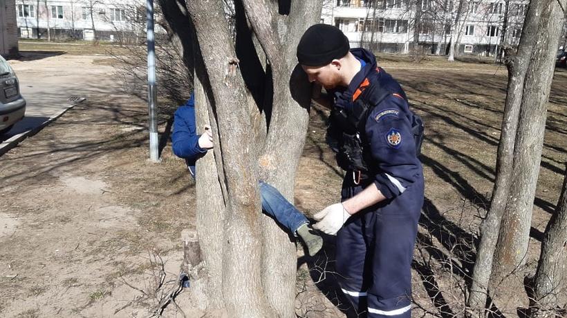 Подмосковные спасатели освободили ребенка, застрявшего на дереве в Дубне