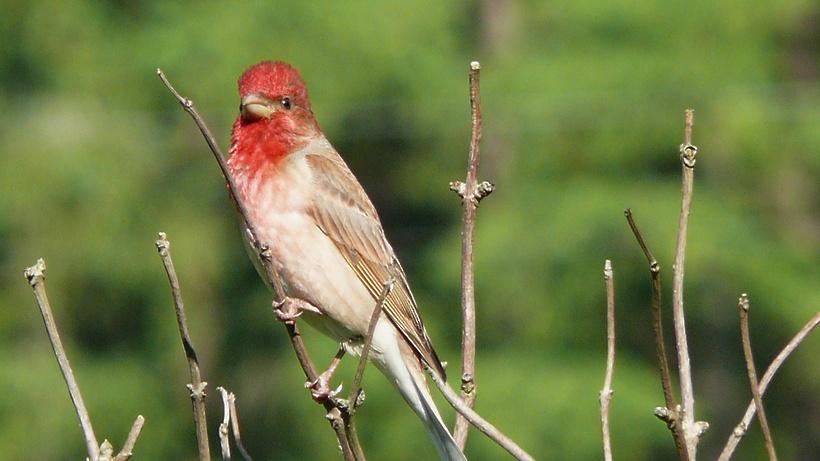 Поголовье птицы увеличилось в Подмосковье на 9,1%