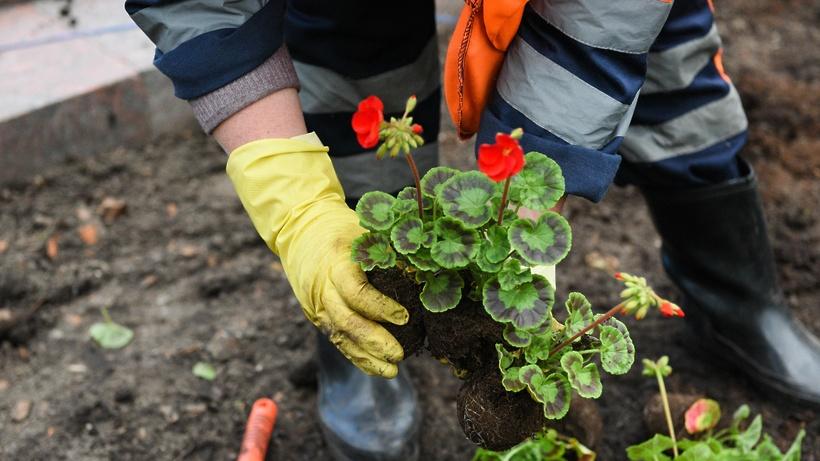 Более 170 тыс цветов высадят в Щелкове весной
