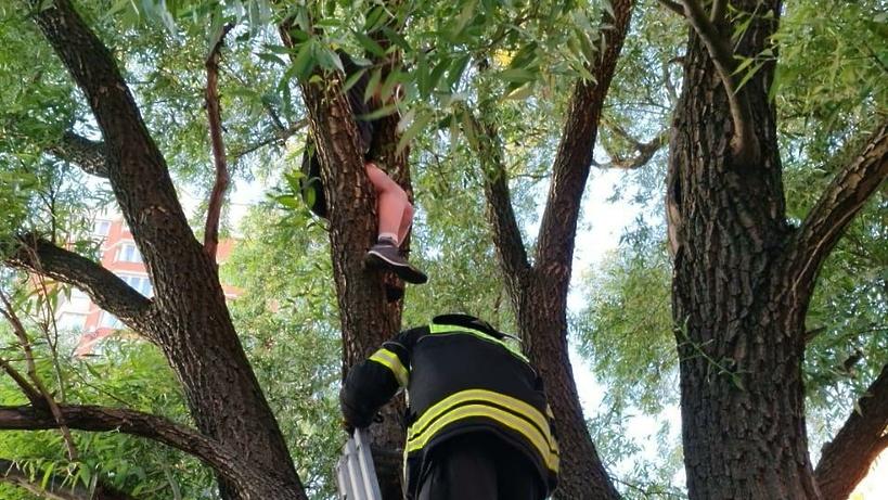 В новой Москве спасатели помогли ребенку спуститься с высокого дерева