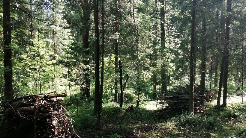 Парки в деревне Марусино и поселке Томилино обустроят в Люберцах в 2021 г