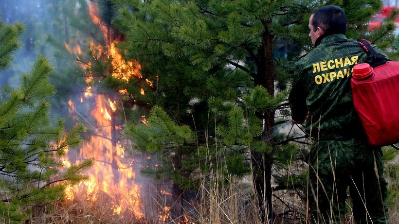 Два лесных пожара произошли в Подмосковье на выходных